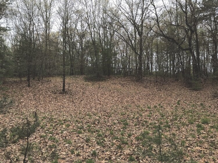 This wooded land near the Grand Haven Memorial Airpark could be redeveloped into homes.