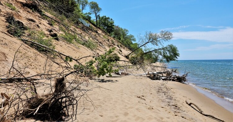 Dune-side trees topple in the wake of lakeshore destruction at Kirk Park.