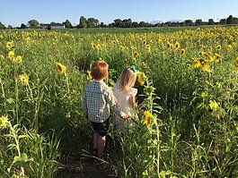 Quinn and Violet Tunison walk through the sunflowers.