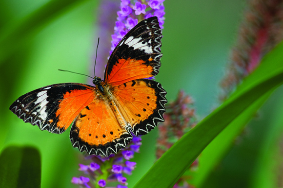 Butterflies Are Blooming: Tropical-themed therapy for winter-weary Grand Rapidians