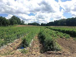Food Basket is looking for land similar to what it has for its farm in Kent County, shown here.