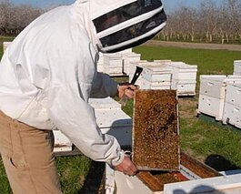 """One-third of everything we eat depends on pollination,"" says Don Lam, of the Holland Area Beekeepers Association (HABA). ""Imagine losing one bite out of every three."""
