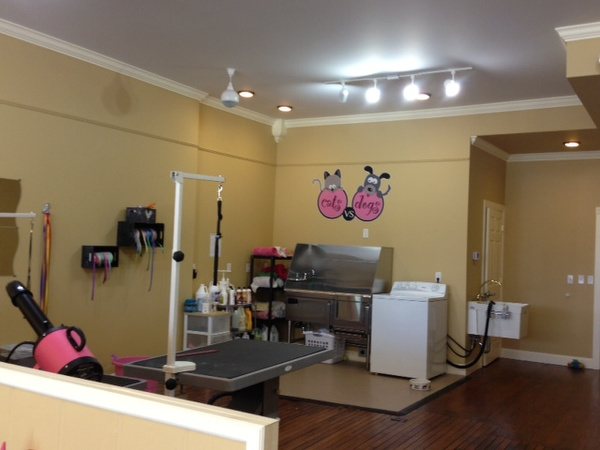 Pets get top dog treatment at new cat and dog grooming salon ...