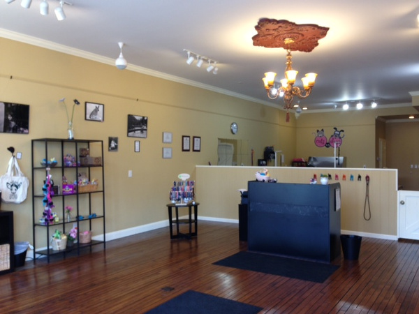 Pets get top dog treatment at new cat and dog grooming for Grand salon design