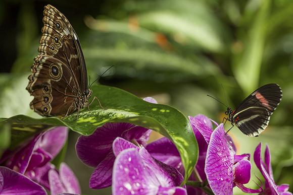 Butterflies At The Meijer Gardens.
