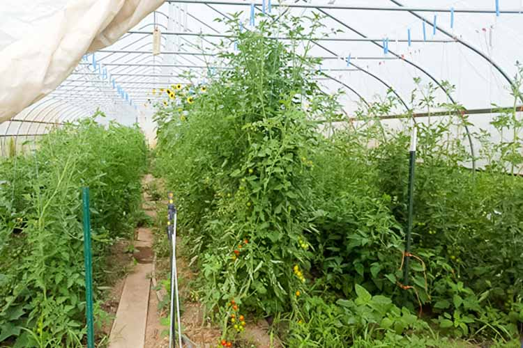 A simple design, the hoophouse captures heat to extend a farmer's growing season.