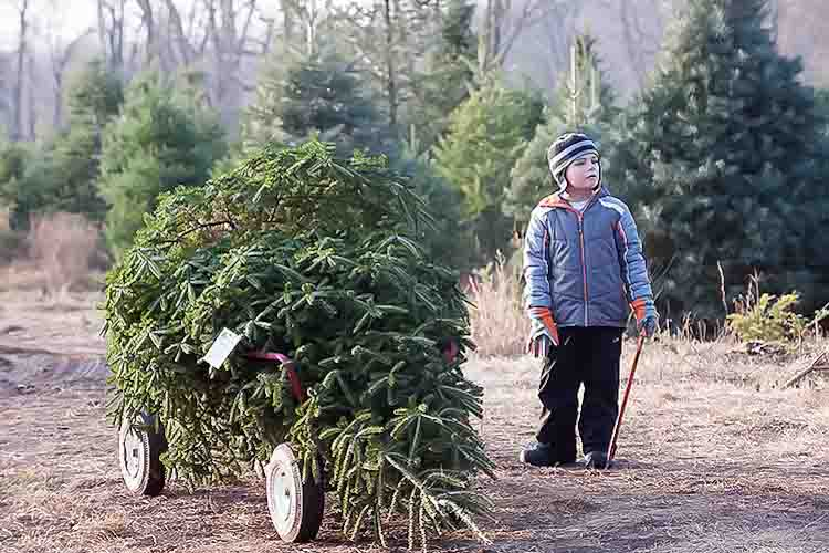 Helping the family pick out the perfect tree. Photo by David Trumpie