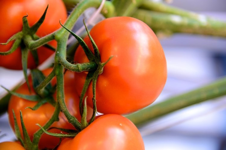 Fresh, vine-ripened Michigan-grown tomatoes year-round are available even in the middle of winter, thanks to Mastronardi Produce's state-of-the-art hydroponic greenhouse in Coldwater Mich.