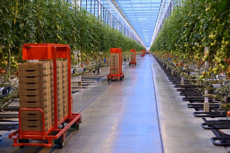 Robotic carts bring stacks of empty boxes into the Coldwater, Mich. greenhouse. Mastronardi Produce
