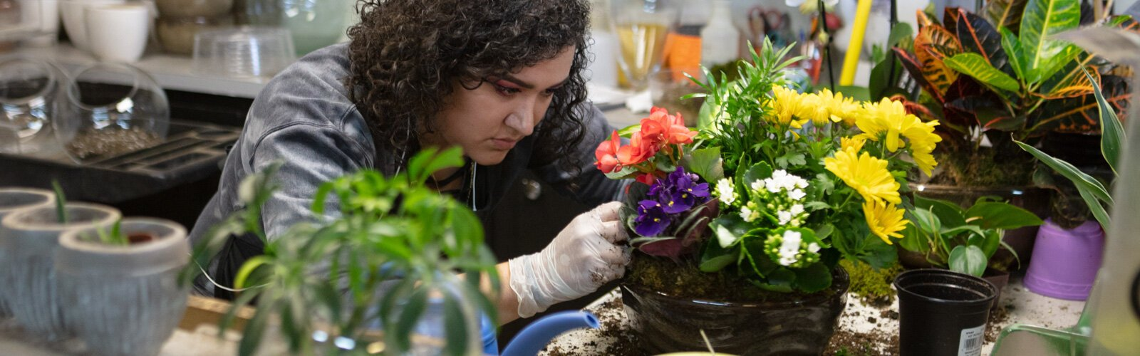 Preparing for spring, Cynthia Carmona plants flowers at Eastern Floral.